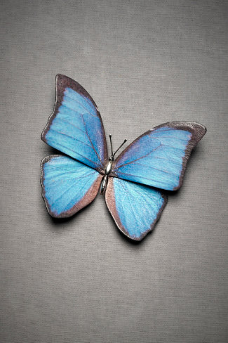 Butterfly Kiss Brooch