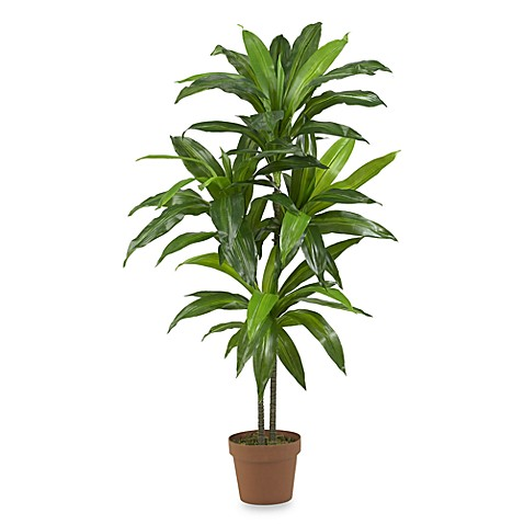 Nearly Natural Real Touch 48-Inch Dracaena Silk Plant at Bed Bath & Beyond in Cypress, TX | Tuggl