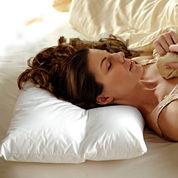 Signature Collection Cervo Comfort 300tc Pillow