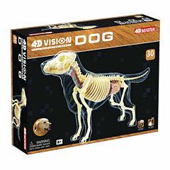 4D Vision Full Skeleton Dog Model