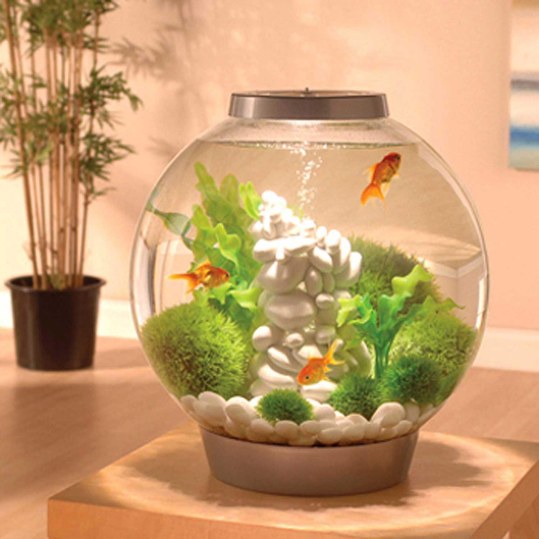 Using Shop Lights For Aquarium: BiOrb Silver Mega Aquarium Kit With Light