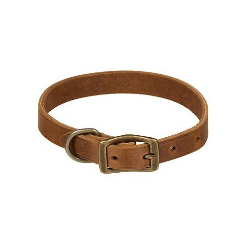 Petco Leather Dog Collar in Copper