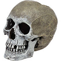 Blue Ribbon Small Life-Like Human Skull Aquarium Ornament