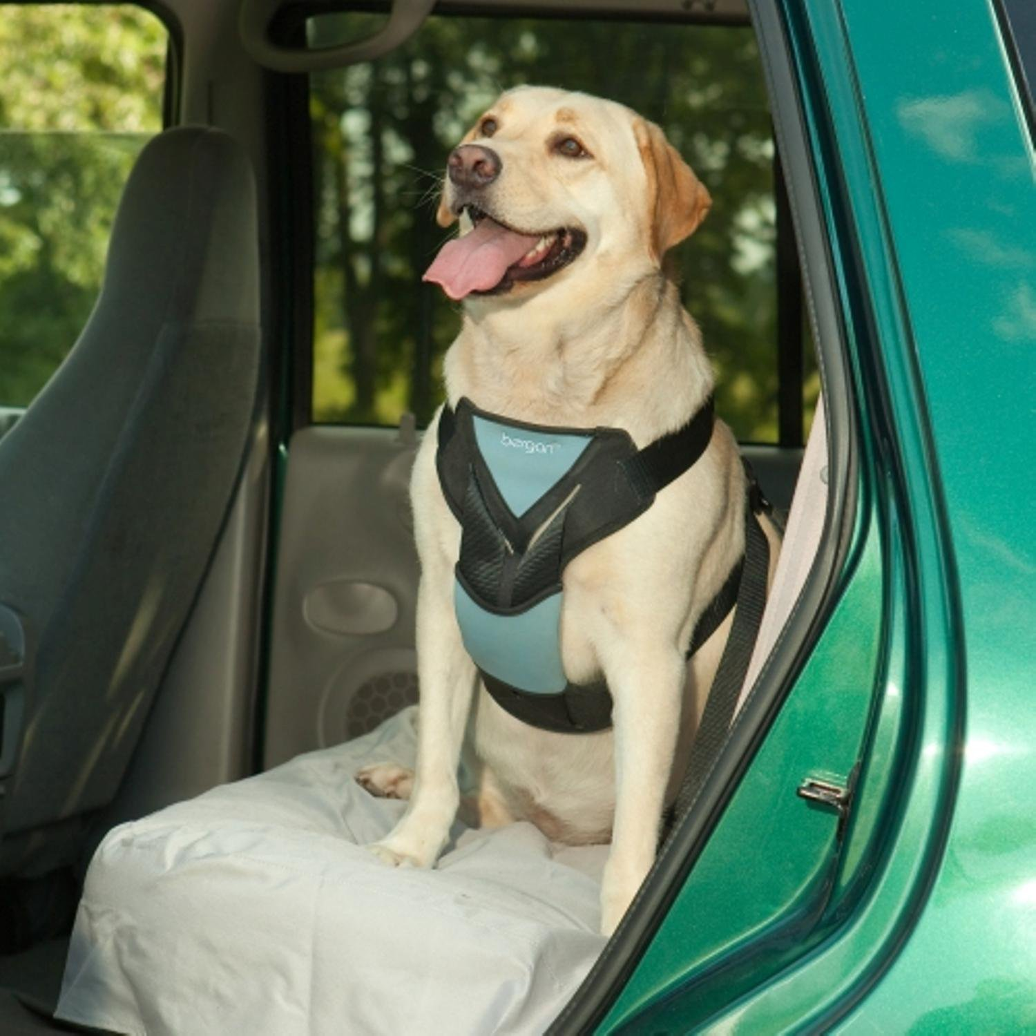 Bergan Auto Harness with Tether Dog Car Harness