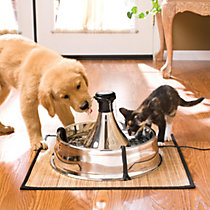 cat waterers, fountains <br>& accessories