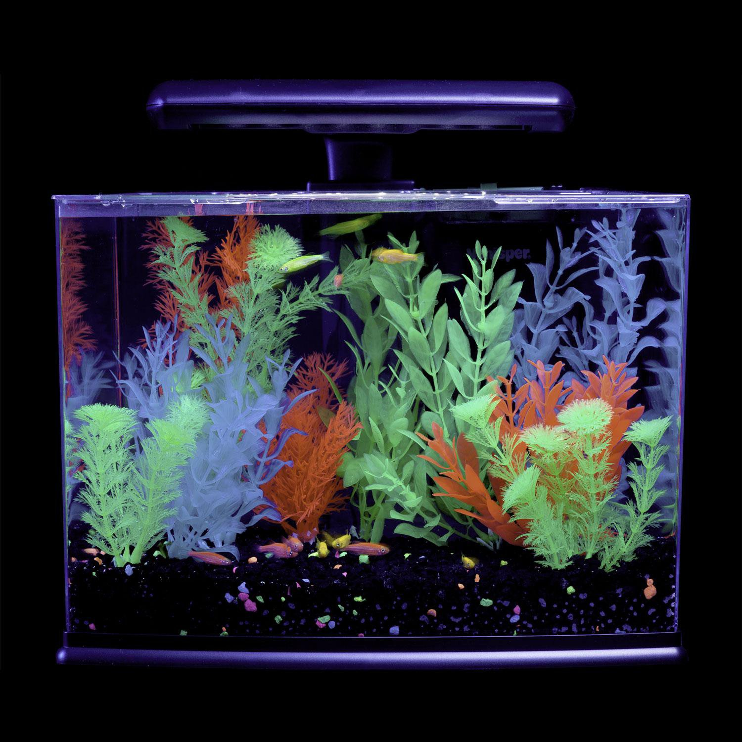 Glofish 3 gallon aquarium kit petco store for Betta fish tanks petco