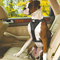 Kurgo Black Tru Fit Smart Quick Release Dual Walking Harness & Seat Belt Harness