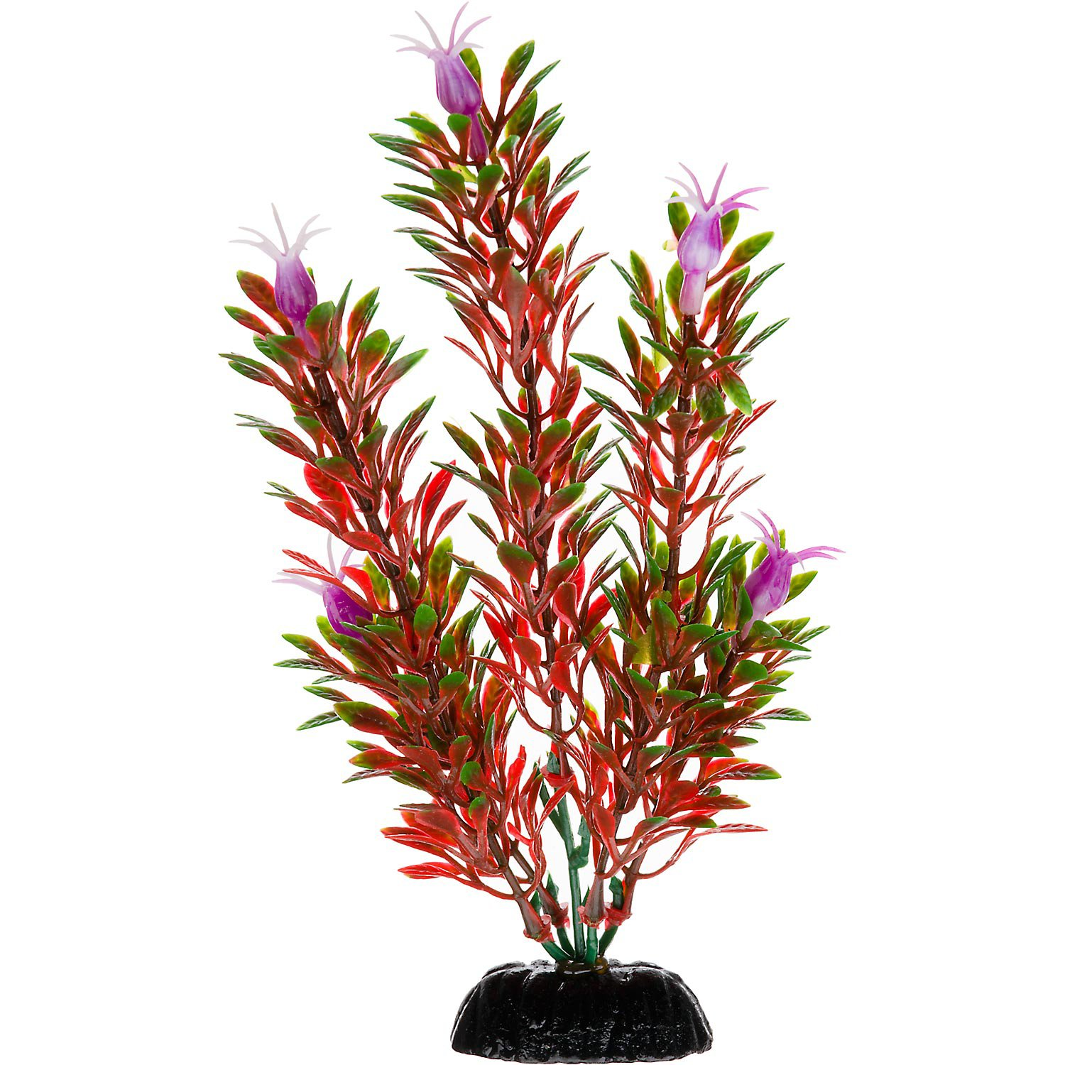 Petco Red & Green Foreground Aquarium Plant | Petco Store