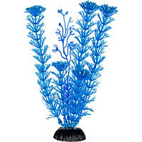 Petco Blue Ambulia Midground Aquarium Plant