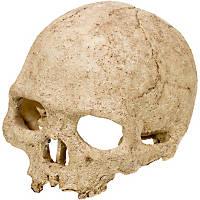Exo-Terra Primate Skull Hideaway