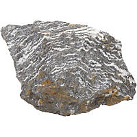 North American Pet Zebra Rock
