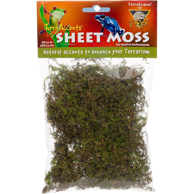 T-Rex Terra Accents Sheet Moss