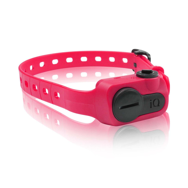 Dogtra iQ No Bark Dog Collar in Pink