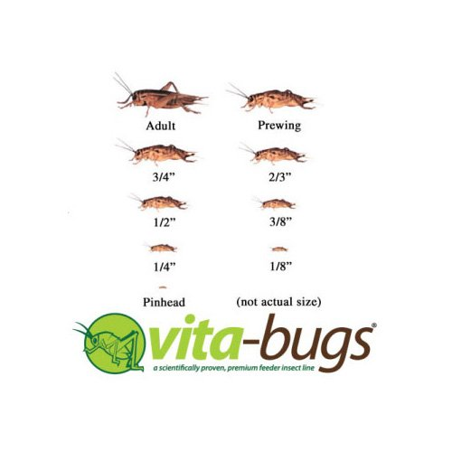 "Vita-Bugs 1/8"" Live Crickets"