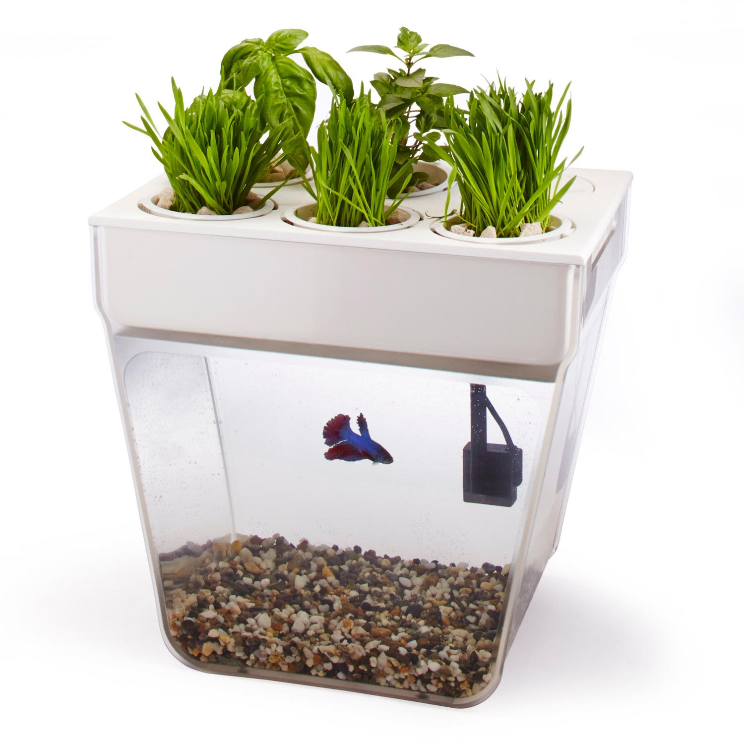 how to clean a small fish tank