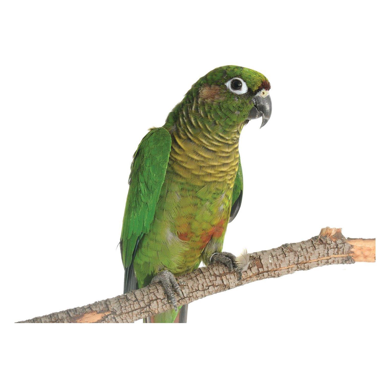 Live Birds: Shop for Pet Birds | PetSmart