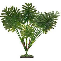 Petco Sago Palm Terrarium Plant