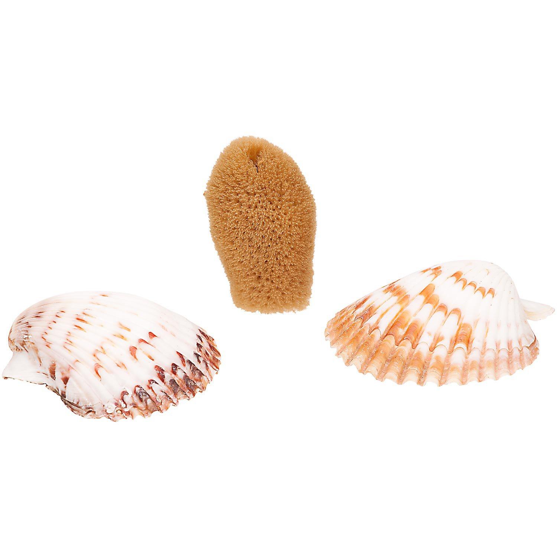 Petco Hermit Crab Sponge & Shell Dishes