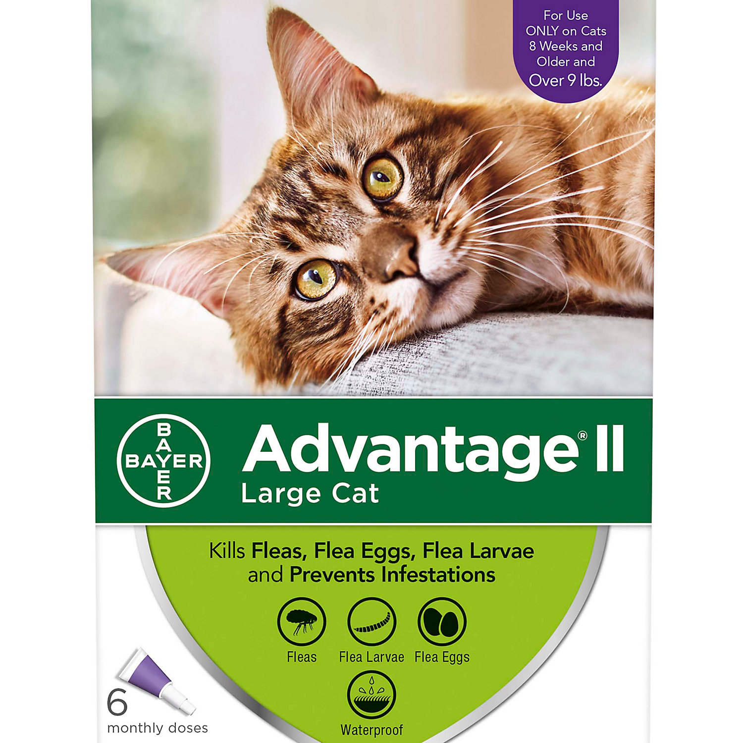 Advantage Ii Once A Month Topical Large Cat Flea Treatment 6 Mo. Over 9 Lbs.