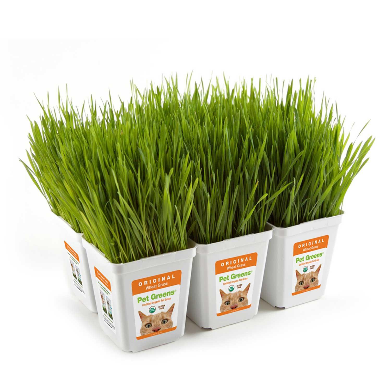 Pet Greens Original Pet Grass