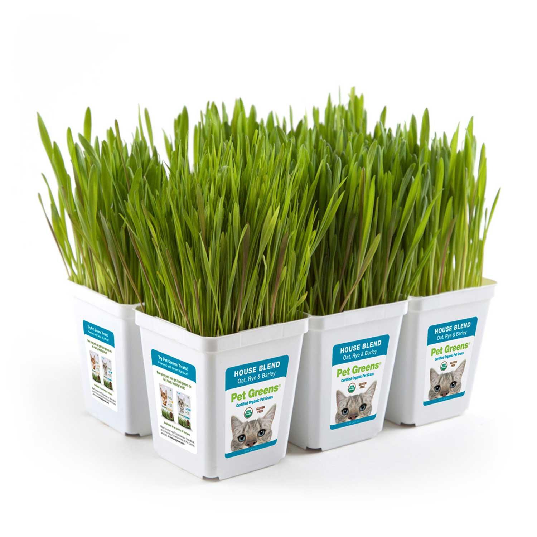 Pet Greens House Blend Pet Grass