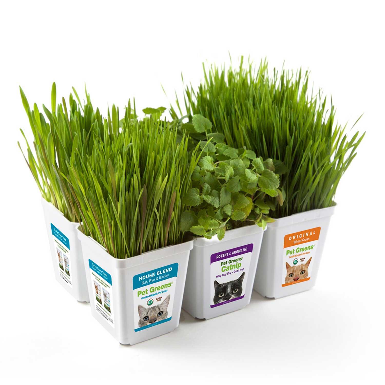 Pet Greens Multi-Pack Pet Grass