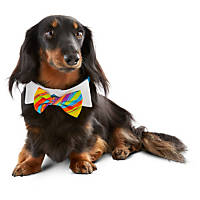 Petco Special Occasions Dog Birthday Bowtie