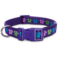Petco Purple Squirrel Nylon Adjustable Dog Collar