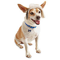 Wag-a-tude Leather Trapper Dog Hat