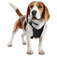 Good2Go Black No Pull Dog Harness
