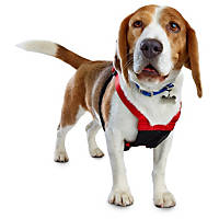 Good2Go Red No Pull Dog Harness