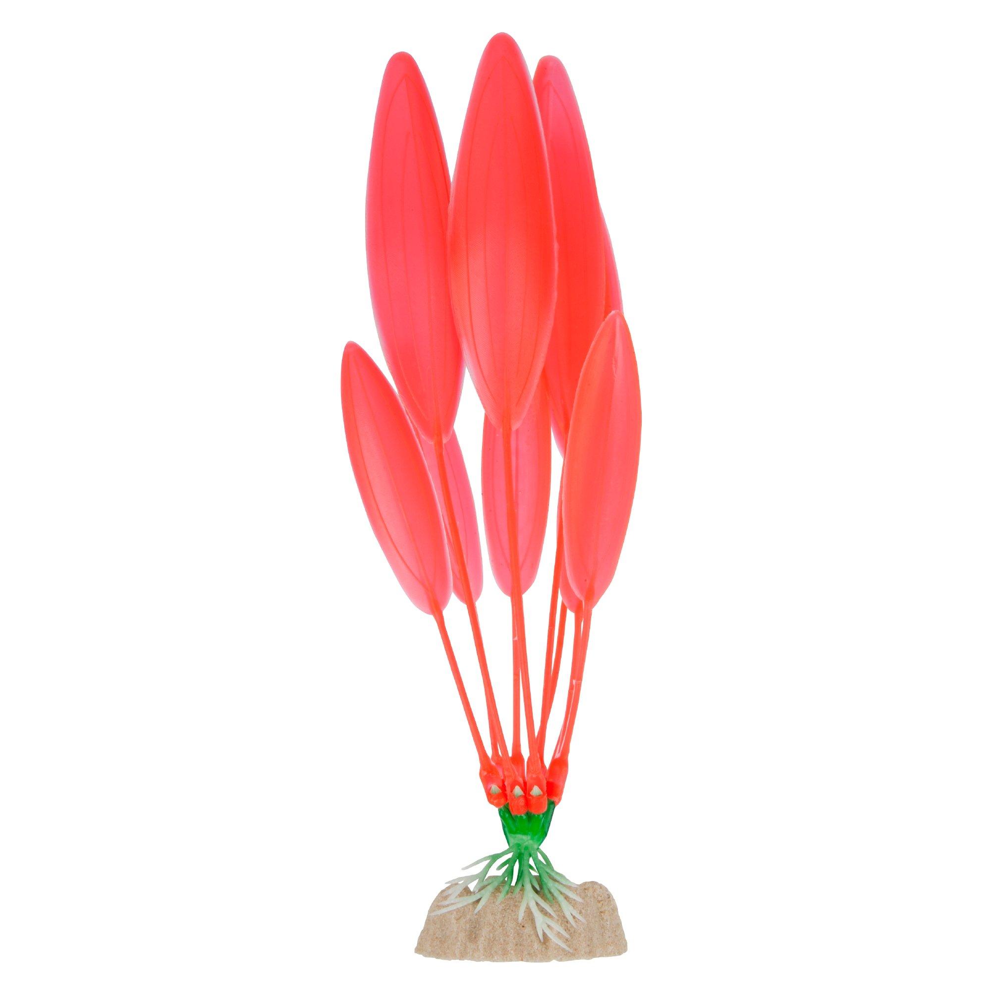 GloFish Orange Plant