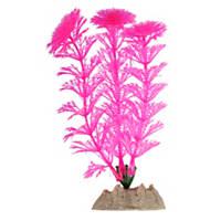 GloFish Pink Plant