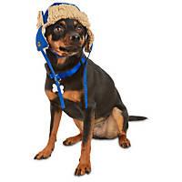 Good2Go Blue Trapper Dog Hat