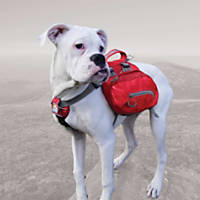 Kurgo Baxter Pack Barn Red Dog Backpack