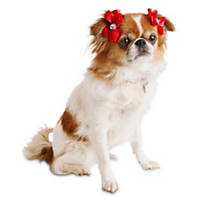 Smoochie Pooch Red Satin Organza Dog Hair Bows