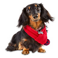 Pup Crew Red Pom Dog Scarf