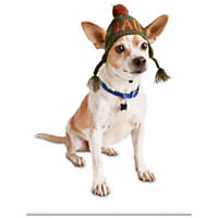 Pup Crew Good Or Bad Wrap Dog Hat