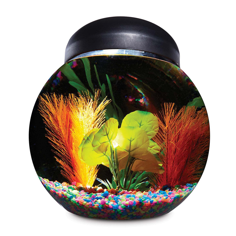 Imagitarium freshwater aquarium 5 2 gallons 2461302 fish for Petco betta fish price