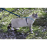 PetSafe Come With Me Kitty Harness and Bungee Leash, Sparkle Blue