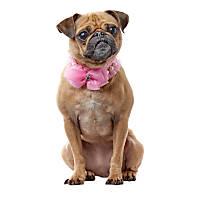 Smoochie Pooch Pink Rhinestone Ruffle Bowl Necklace
