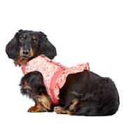 Smoochie Pooch Bright Floral Ruffle Harness