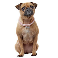 Smoochie Pooch Pink Pearls with Bone Charm Necklace