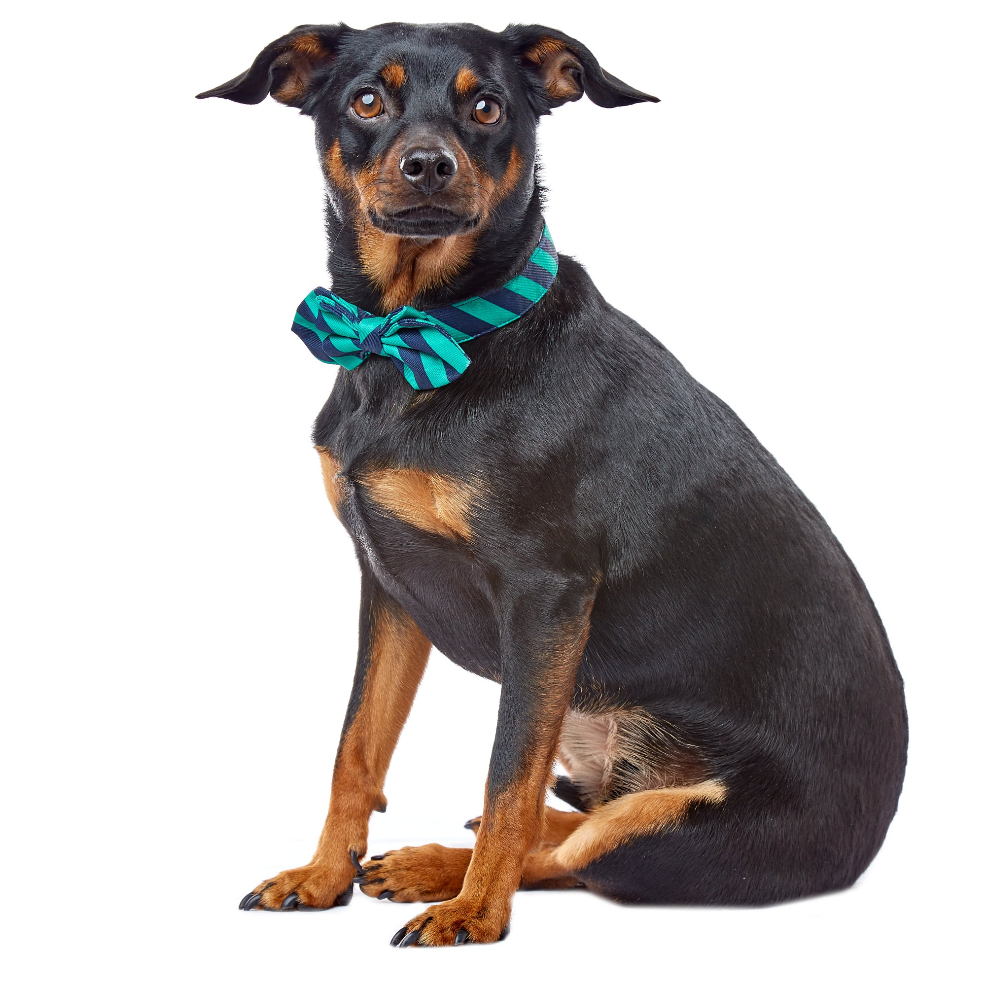 Wag-A-Tude Navy and Green Striped Bowtie