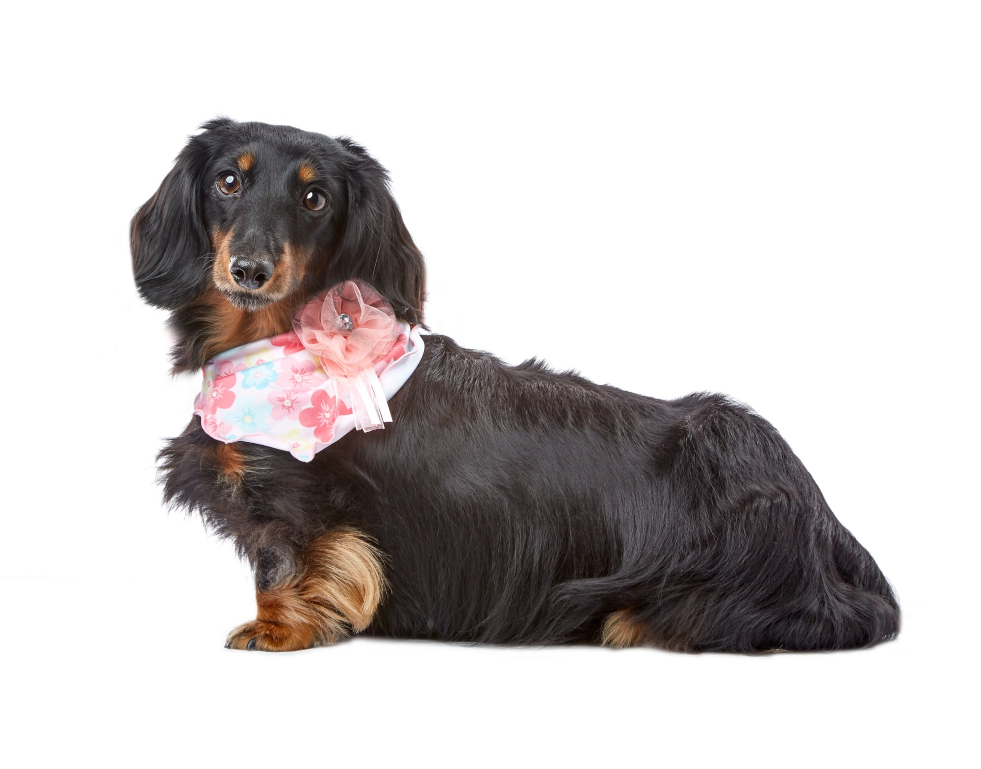 Smoochie Pooch Pink and Blue Floral Bandana