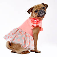 Smoochie Pooch Coral and Cream Glitter Dot Ruffle Dress