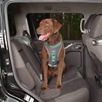 Kurgo Gray & Turquoise Journey Dog Harness