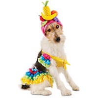 Halloween Bootique Carnival Pet Costume