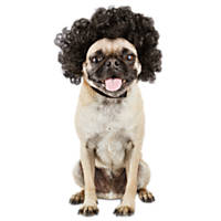 Halloween Bootique Disco Dog Wig