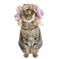 Halloween Bootique Hot Roller Pet Wig